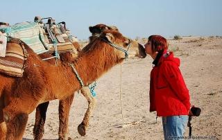 Pociągi w Tunezji i wielbłądy