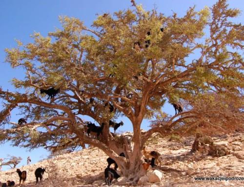 Maroko wycieczki fakultatywne – aktualne ceny