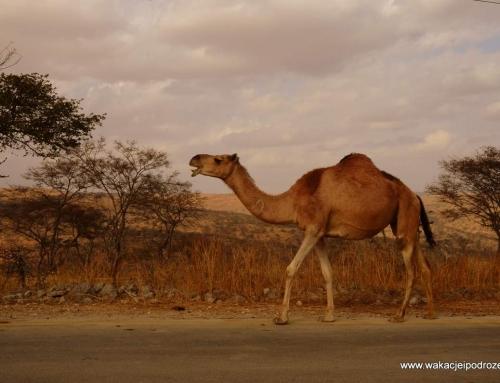 Ciekawe miejsca w Omanie – odkrywamy Rakhyut