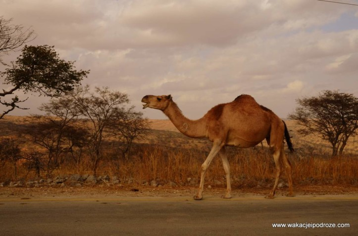 Ciekawe miejsca w Omanie - droga do Rakyut