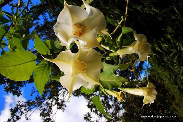 Palheiro_garden_madeira32