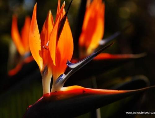 Ogrody na Maderze – Quinta de Palheiros Gardens
