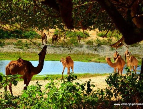 Oman – ciekawe miejsca – Wadi Darbat