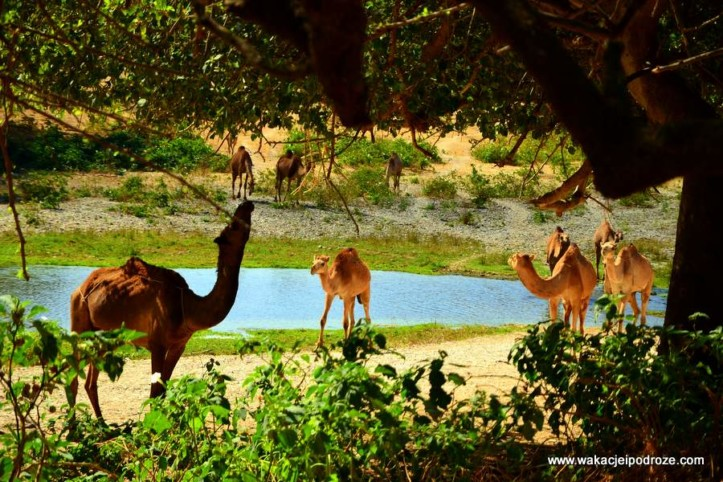 Oman ciekawe miejsca - Wadi Darbat