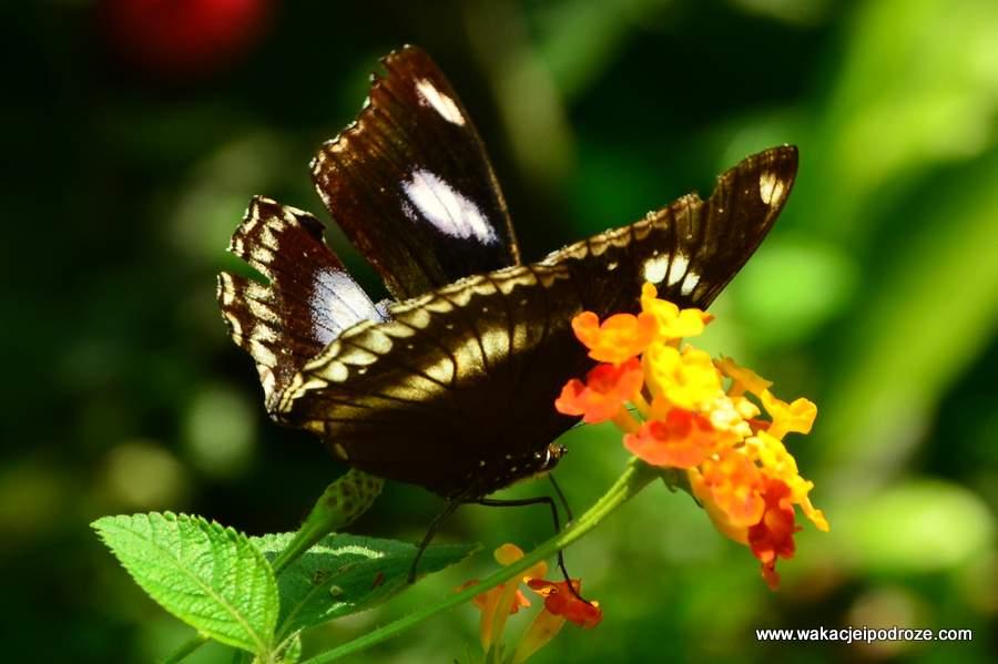 kuala-lumpur-park-motyli (3)