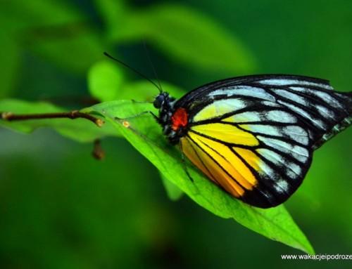 Kuala Lumpur park motyli i ogród Perdana Botanical
