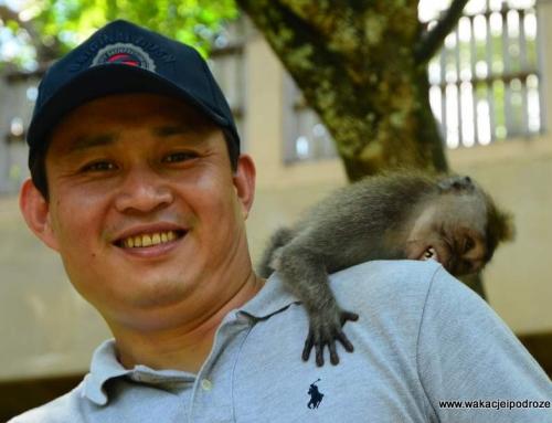 Jak dać się ugryźć małpie – poradnik turysty