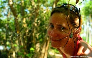 Komary w Malezji i największe pająki