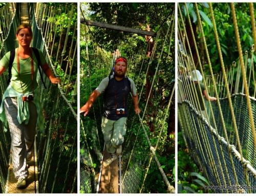 Każdy może zajrzeć do dżungli !