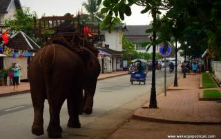 Słonie w Laosie