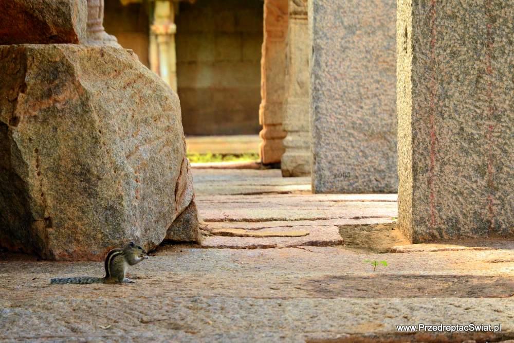 Zwiedzanie Hampi - nie wierzcie tym, którzy mówią, że Hampi jest zatłoczone i turystyczne. Wystarczy wyjść kawałek dalej by w podziwianiu świątyni i krajobrazów towarzyszyły nam głównie wiewiórki ;-)