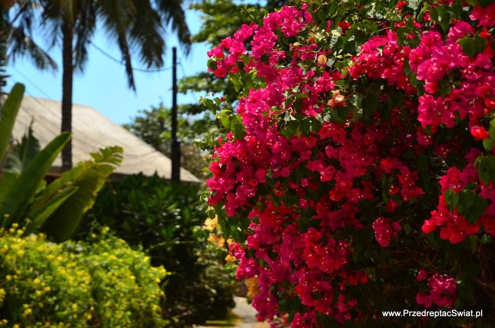 Czy warto polecieć na Mauritius