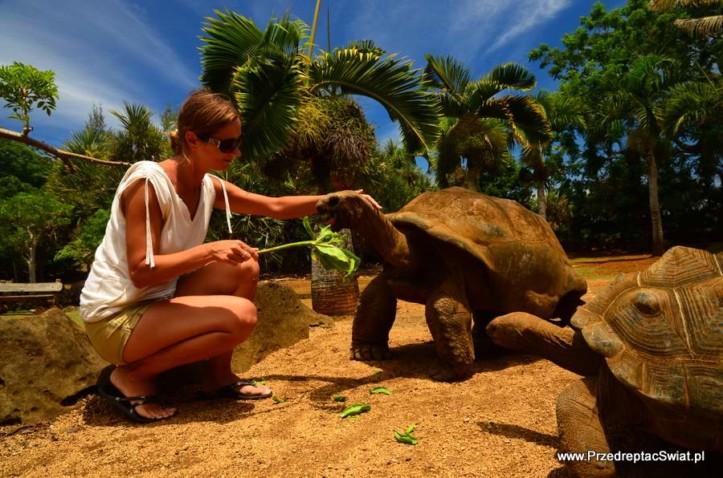 Żółwie olbrzymie i co jeszcze warto zobaczyć na Mauritiusie
