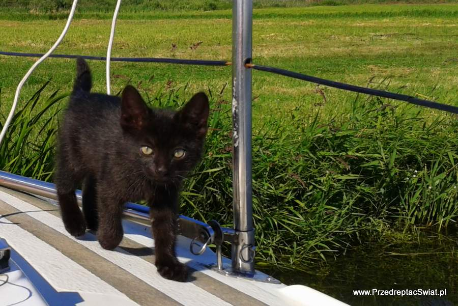 Opiekun dla kota - flats for pets