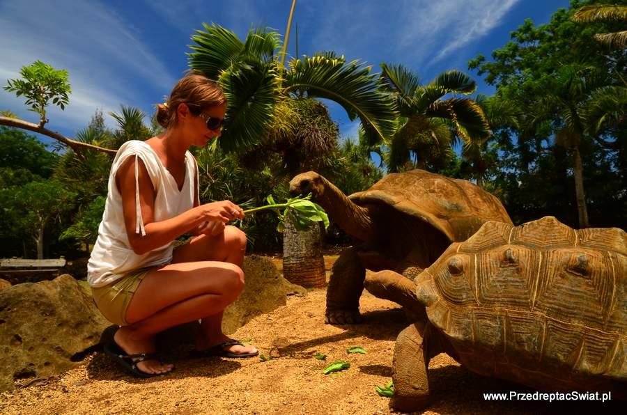Mauitius żółwie olbrzymie