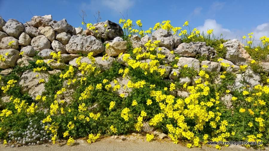 Murek z kamienia - Malta
