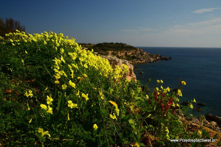 Malta - wiosna - kwiaty
