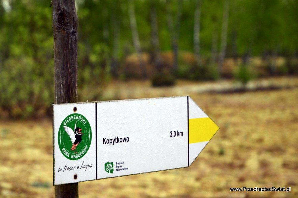 Biebrzański Park - żółty szlak z Kopytkowa